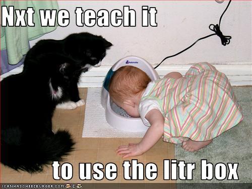 File:Funny-Cats-animal-humor-4172462-500-375.jpg
