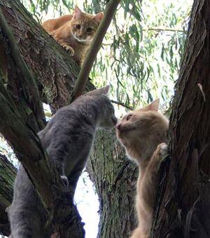 Cat-kitten-tree