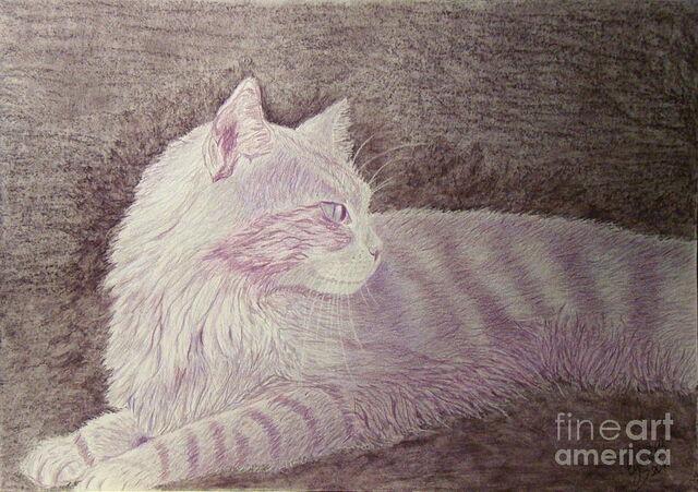 File:Purple-cat-cybele-chaves.jpg