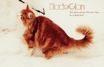 BladeClanWP