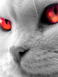 Cat002yc6-1-