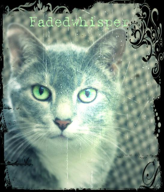 Fadedwhisper.poster