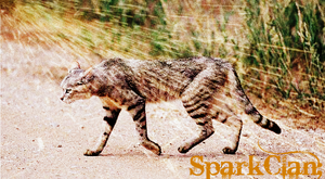 SparkClan