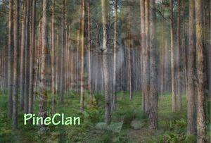 PineClan