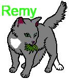 File:Leaf cat.png