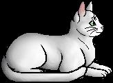 Whitetail (WC).elder