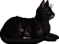 Crowfur.elder