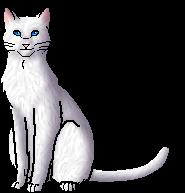 white cat breeds list