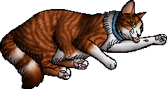 File:Rocky.kittypet.png