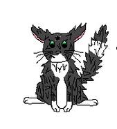 Cat-Blank-22