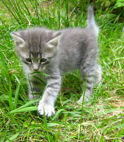 Black-and-white-kitten-outside-hd-lady-holiday--may-2012-image