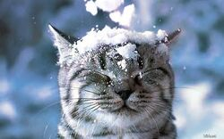 Adorable cat cold cute kitty snow 8e751f588f007a5d1379012513a21357 h