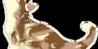 Dappleblossom