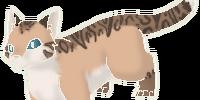 Leopardpaw