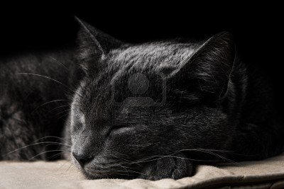 File:15253431-sleeping-dark-gray-cat-with-black-background.jpg