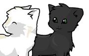 Pallidpaw and Nightpaw