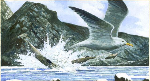 File:Stories gull-1-.jpg