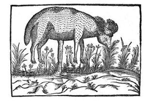 Lamb tree -2-