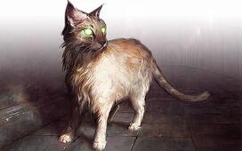Feature189 cat