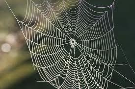 File:Cobweb.jpg