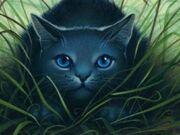 Bluestar-warrior-cats