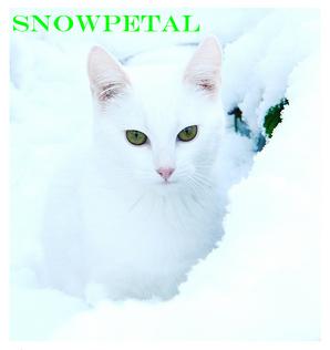 Snowpetal