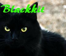 Blackkit
