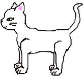 Short Haired She-cat