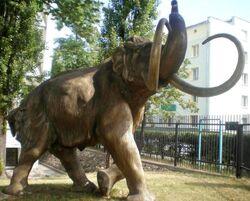 Muzeum Geologiczne mamut.JPG