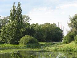 Jezioro Powsinkowskie (2).jpg
