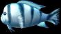 Insignia Fish