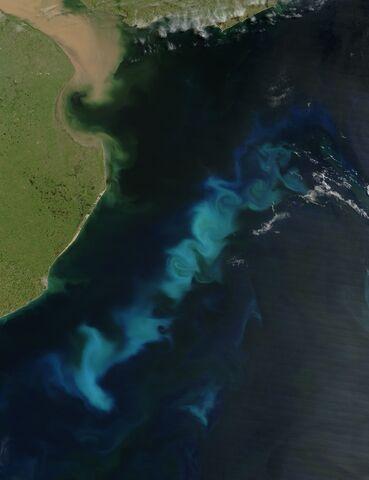 File:Phytoplankton SoAtlantic 20060215.jpg