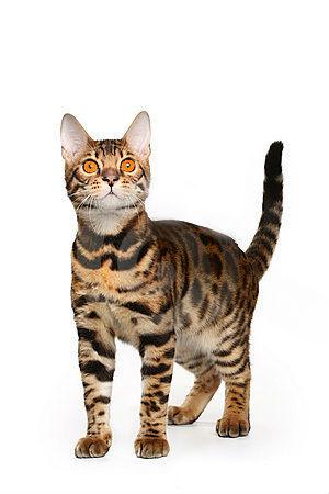 File:Leopardclaw..jpg