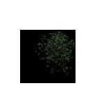 File:Tree8.v2.png