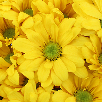 File:Yellow flower.jpg
