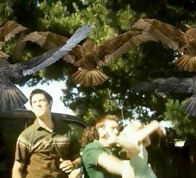 File:BirdemicCap2.jpeg