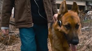 File:Cool dog.jpg