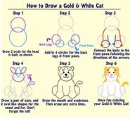 How to Draw a Gold and White Cat
