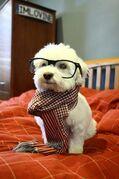 ANT AVA'S NERD DOG