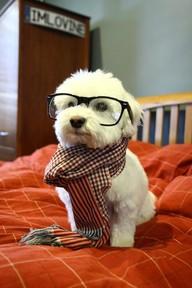 File:ANT AVA'S NERD DOG.jpg
