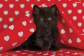 File:ANT Ava's Kitten.jpg