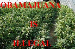 Obamajuana