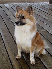 File:Wizard - Spirit Guide Dog.jpg