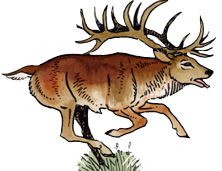 Cerf.png
