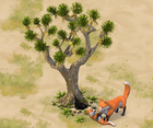 Desert-fox-den