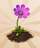 Epic Flower
