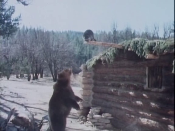 File:The Life and Times of Grizzly Adams - Fugitive - Image 2.png