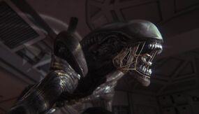 Alien alien isolation