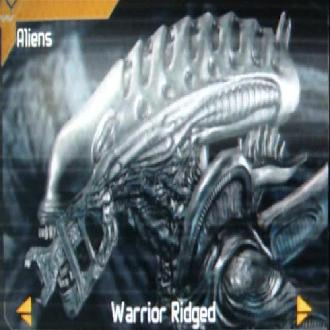 Warriorridged