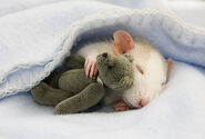 Cutest animals mouse